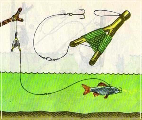 ловля хищной рыбы на летние жерлицы