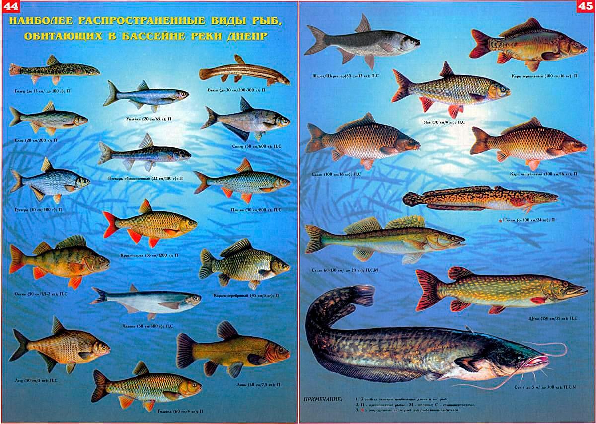 Виды рыб