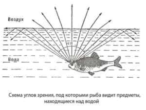 Зрение-рыб-3