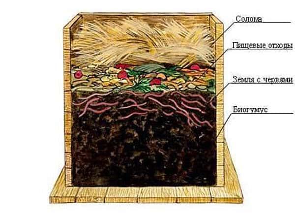 Чем в домашних условиях кормить червей
