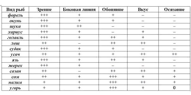 Organy_obonyaniya_i_vkusa_ryb