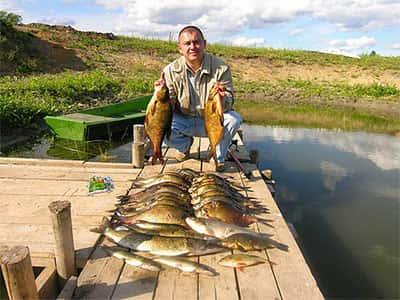 fishhungry как пользоваться