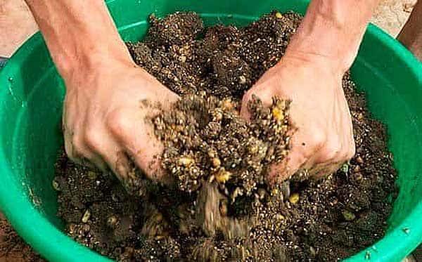 прикормка для сазана из кукурузы
