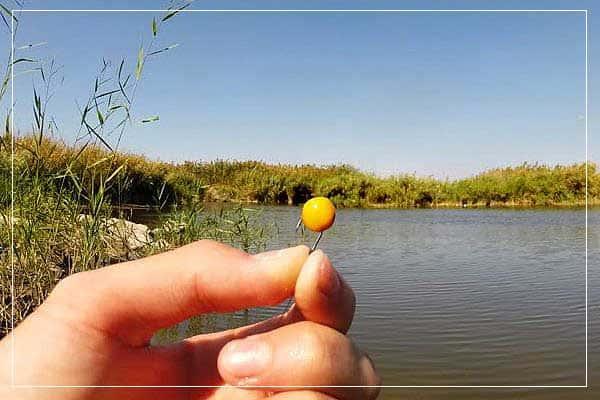 Горох для рыбалки. Как приготовить горох для рыбалки?