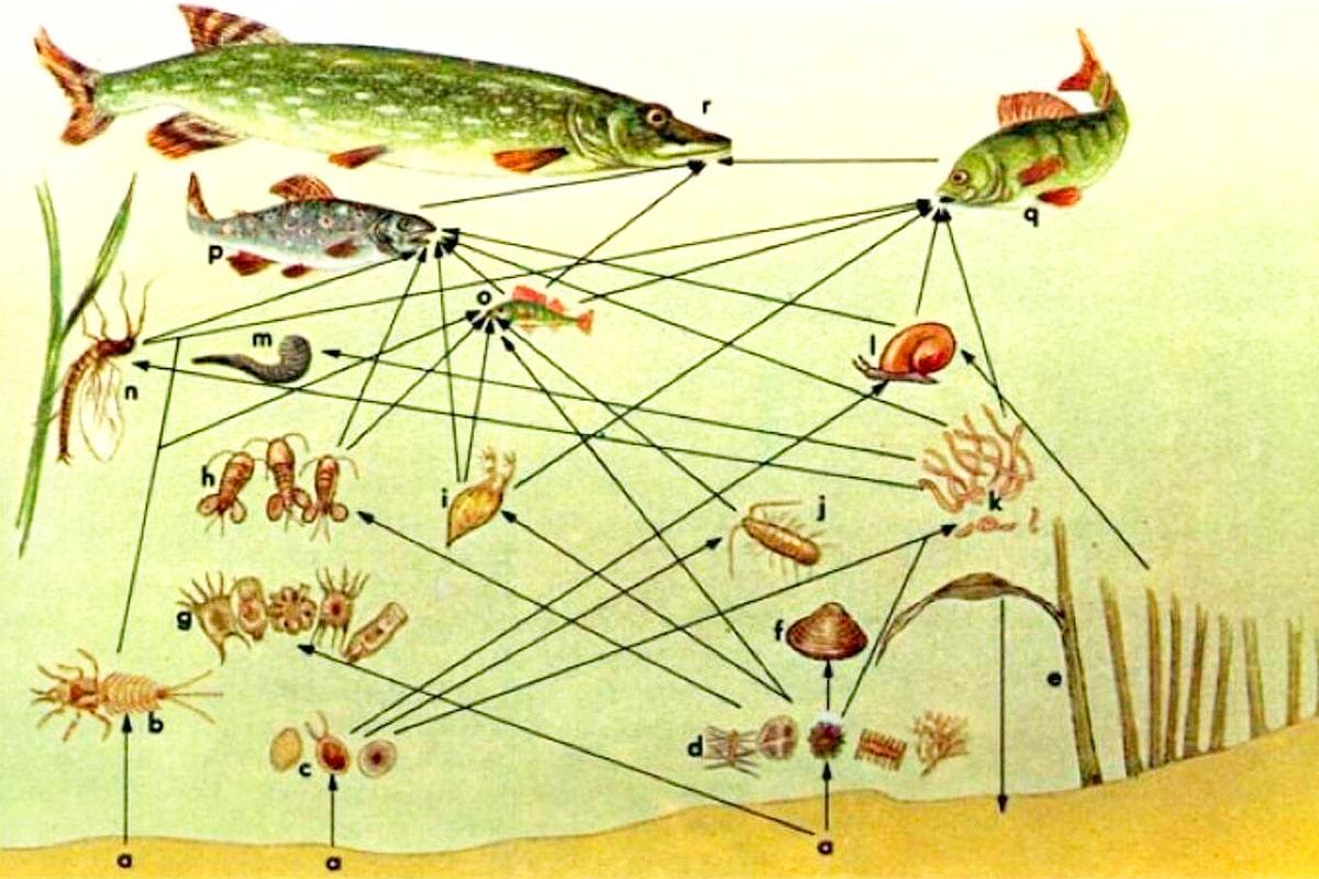 Питание рыб