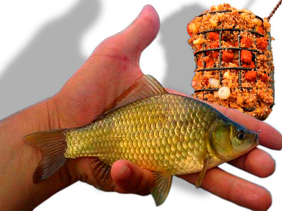 Рыба карась фидер