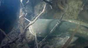 Kak lovit soma 02 300x163 - Как ловить сома - Секреты успешной рыбалки