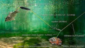 Kak lovit soma 07 300x170 - Как ловить сома - Секреты успешной рыбалки