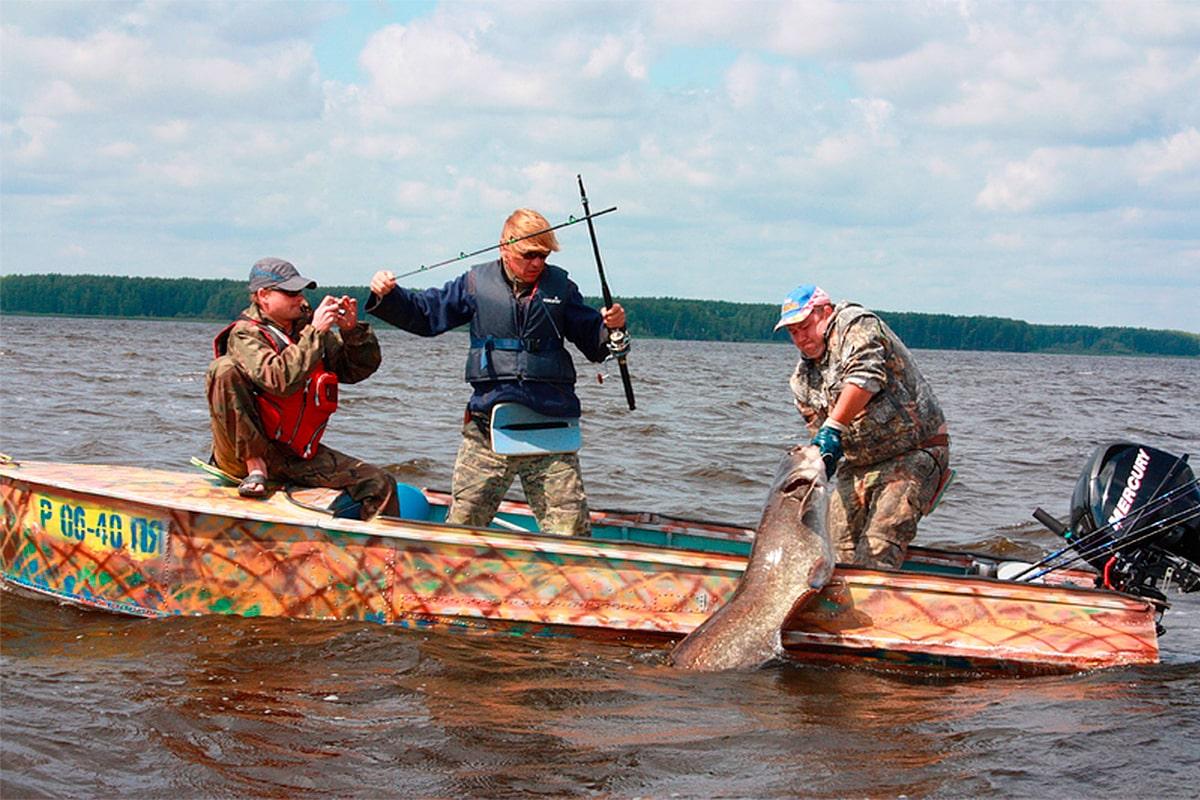 ловля сома с лодки наживка и снасть