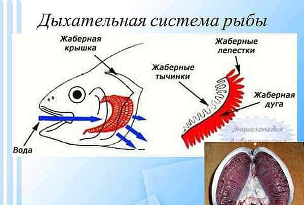 активатор клева fish hungry купить в харькове