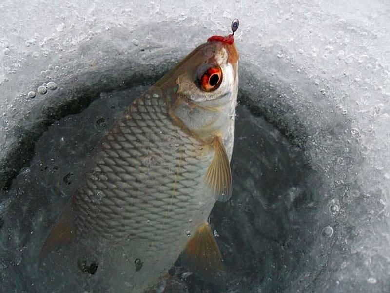 Рыбалка на мормышку в декабре