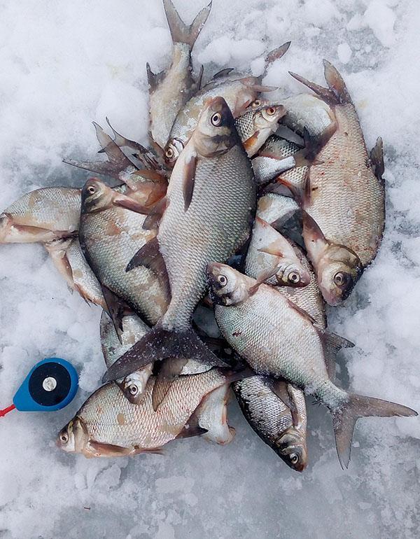 Отчеты о рыбалке на можайском водохранилище 2018