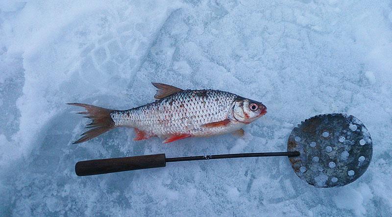Отчёт с рыбалки